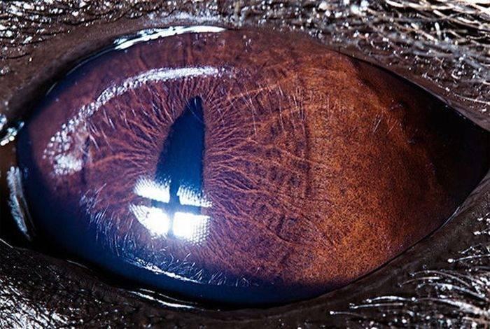Oczy zwierząt 12