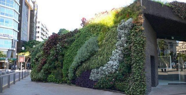 Pionowe ogrody 13