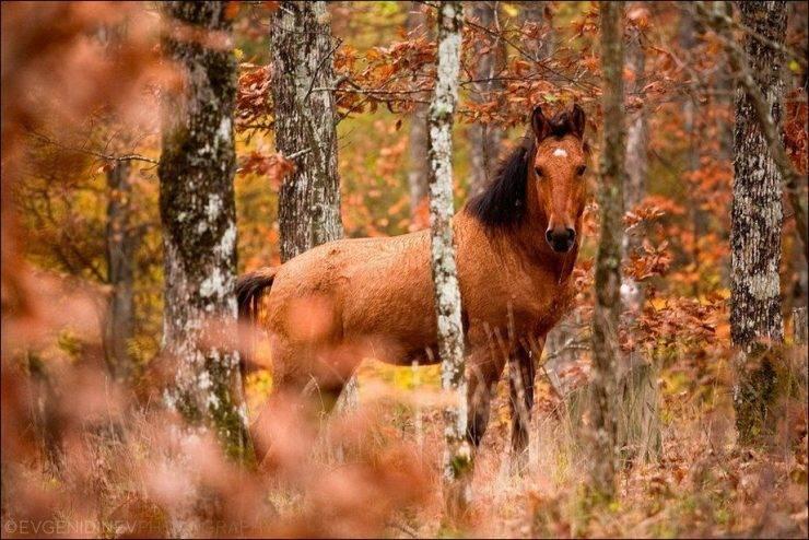 Barwy jesieni 35