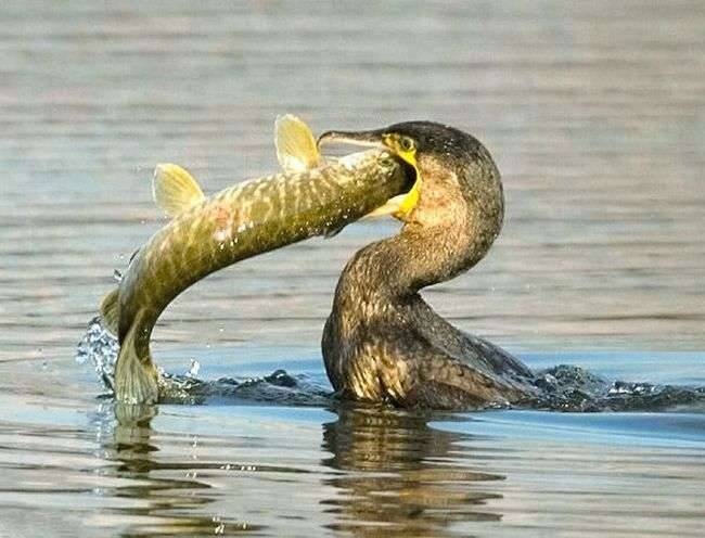 Co jedzą ptaki ? 9