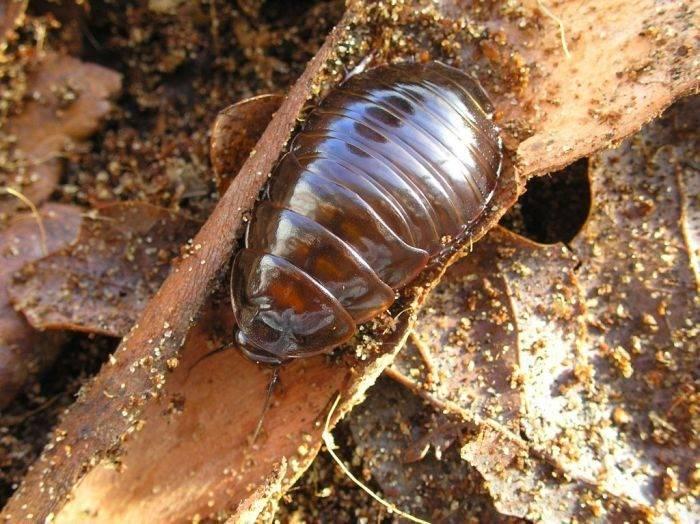 Największe owady 36