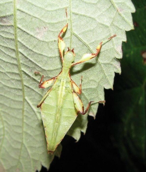 Największe owady 3