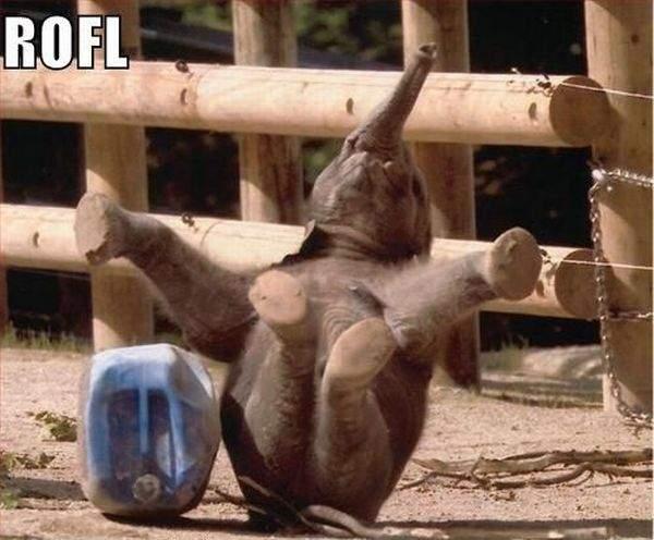 Śmieszne zdjęcia zwierząt #3 15