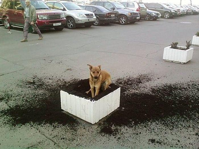 Zabawne zdjęcia psów 9