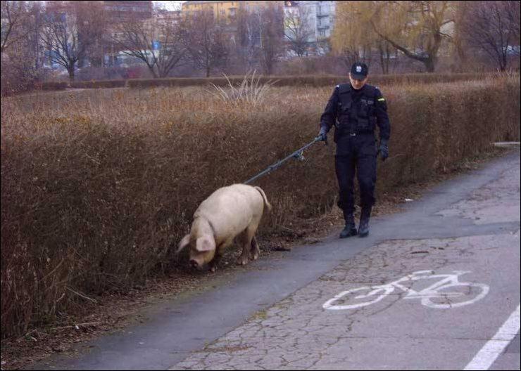 Policja z przymrużeniem oka 8