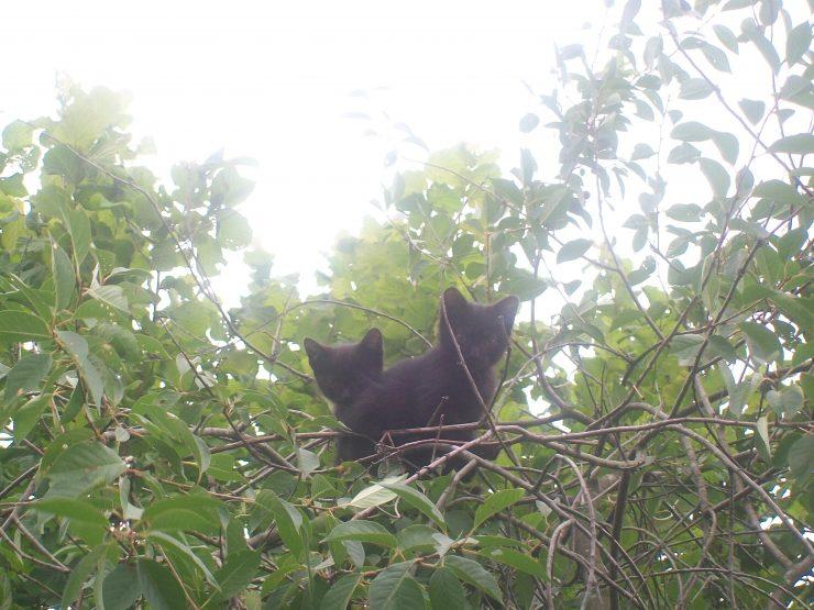dwa diabły na drzewie:D 1