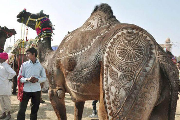 Bikaner Camel Festival 11