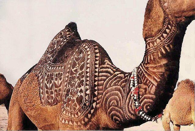 Bikaner Camel Festival 1