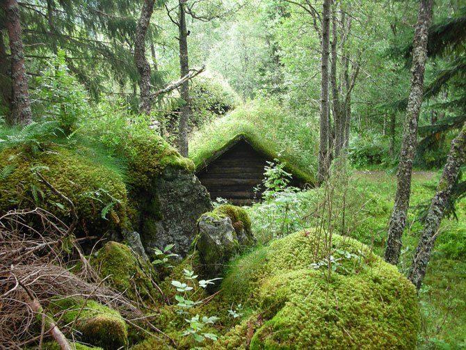 Zielone dachy w Norwegii #2 1