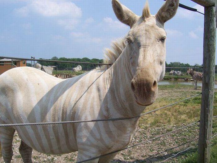 Zwierzęta albinosy 5