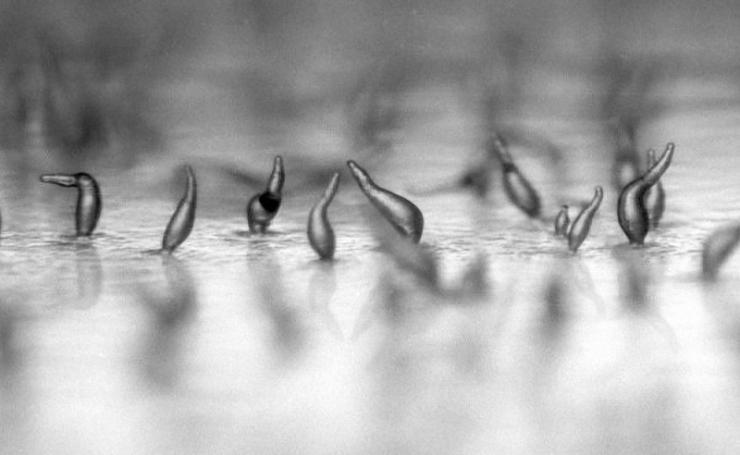 Mikroskopijne piękno 4