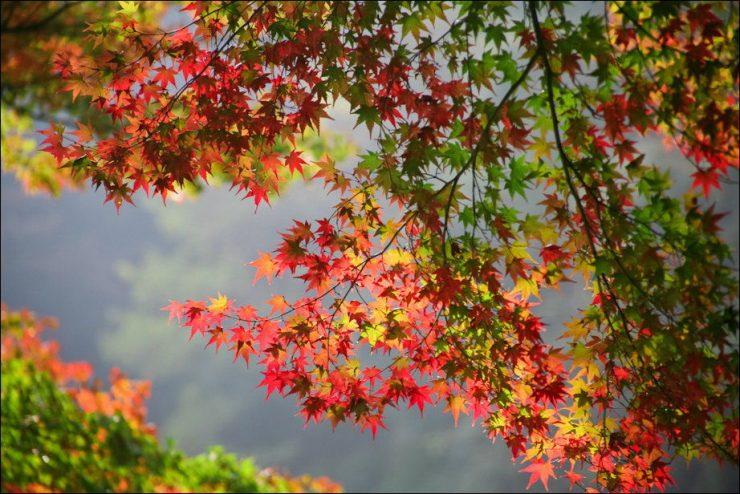 Barwy jesieni 22