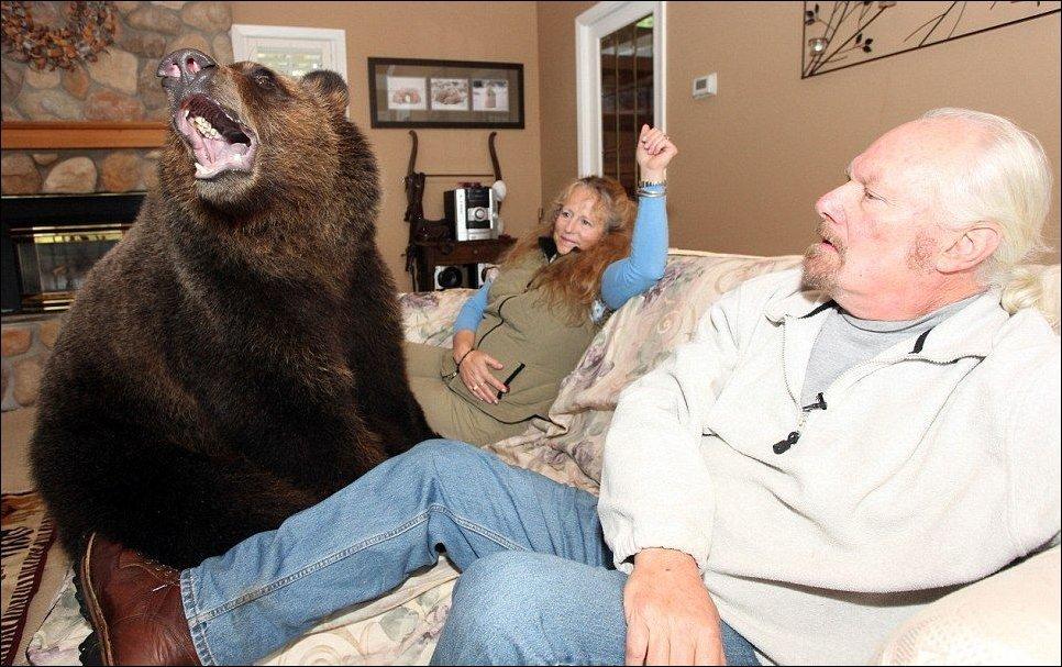Z niedźwiedziem w domu 4
