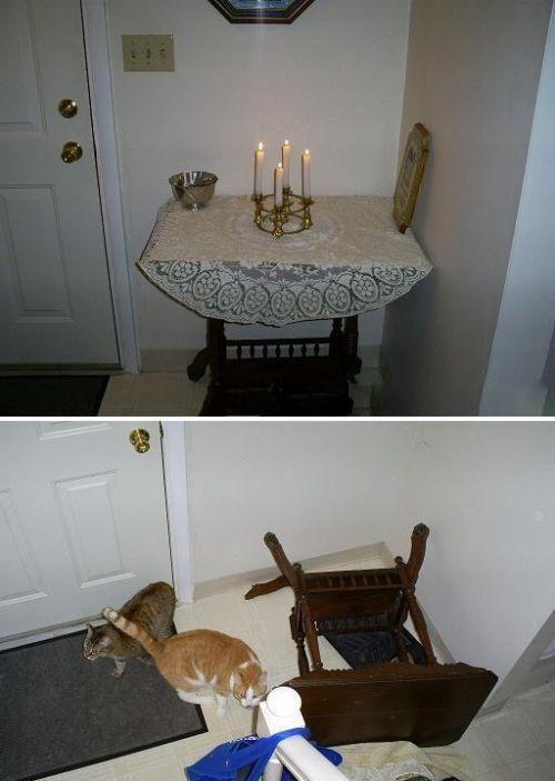Zwierzaki same w domu 9