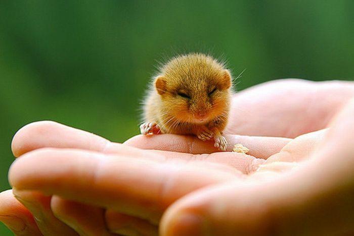 Małe zwierzaki #4 9