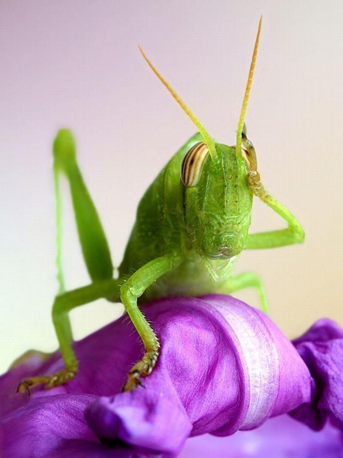Makrofotografia: owady #3 15