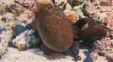 Скачать с letitbit  Удивительный океан / Amazing Ocean (2012) HDRip
