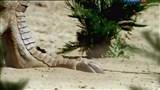 Скачать с letitbit  По лабиринтам динозавриады / Dinosaurs: A Horizon Guide (2011) SATRip