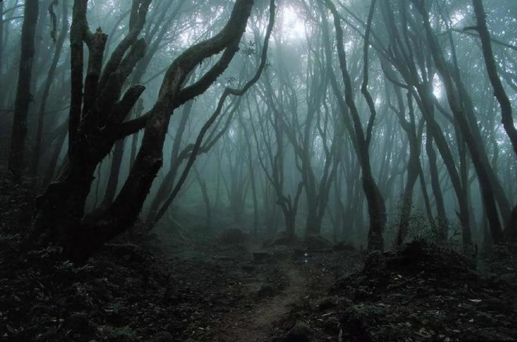 Der Wald von Graggoth T4im9z8y