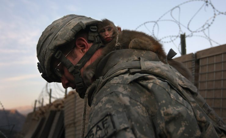 Zdjęcia z wojny w Afganistanie 30