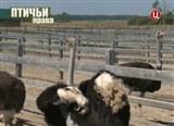 Скачать с letitbit  Без обмана. Птичьи права (2013) IPTVRip
