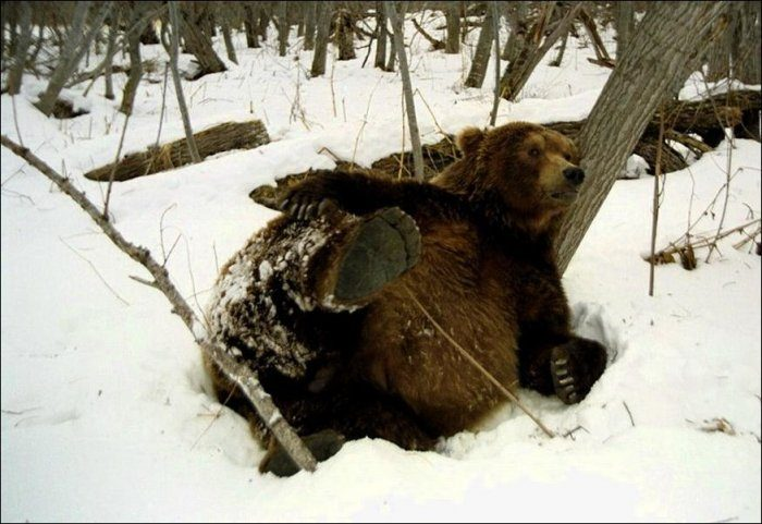 Niedźwiedzie #2 6