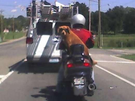 Psy na motocyklach 1