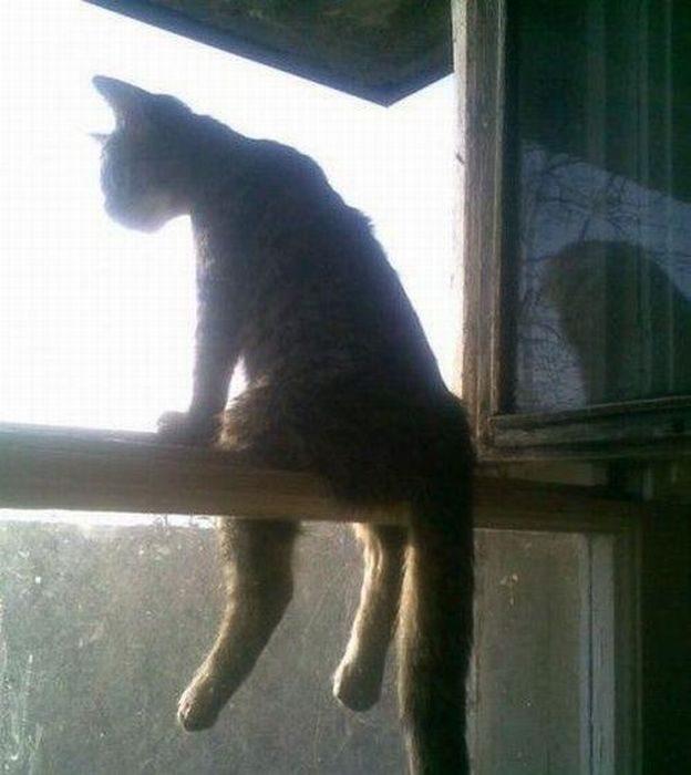 Wyluzowane koty 12