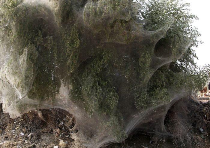 Inwazja pająków 8