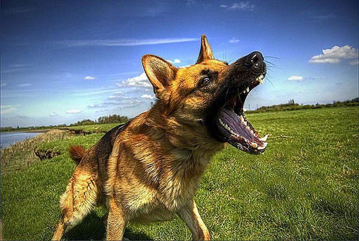 Zdjęcia zwierząt w HDR 57