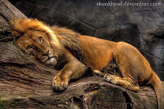 Zdjęcia zwierząt w HDR 46