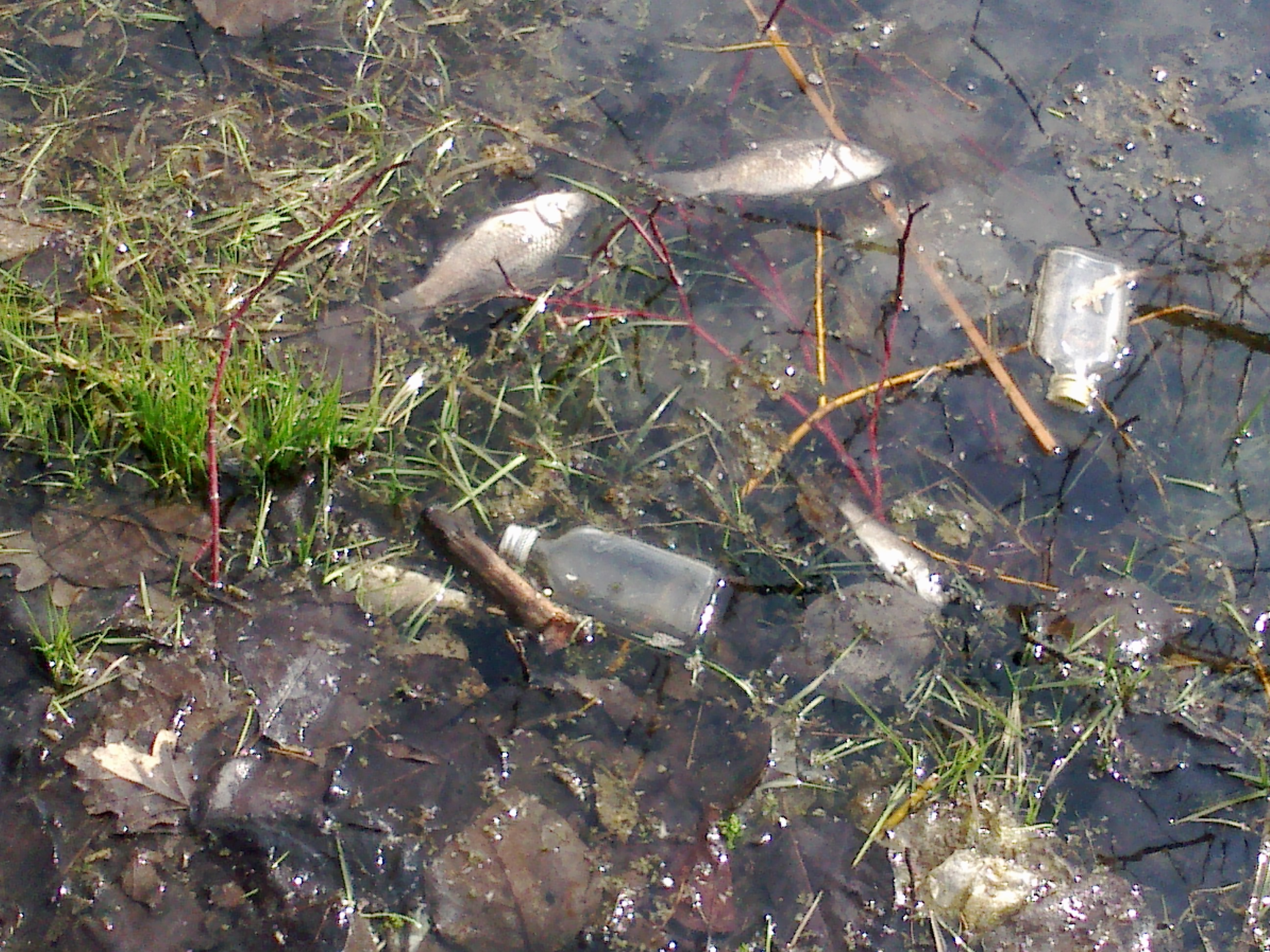 Tote fische im teich stimmt was nicht wasser for Fische in teich