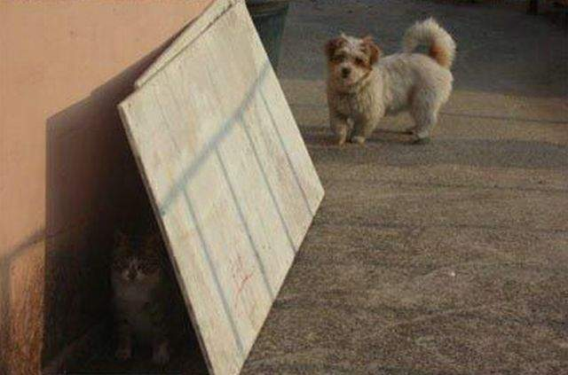 Kot i pies w jednym domu ? 27